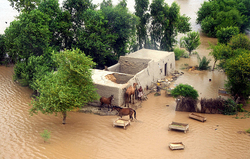 Severe Flooding in Pakistan (5)