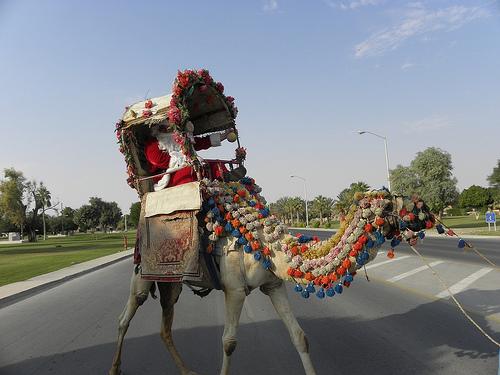 Santa Arrives on a Camel (2)