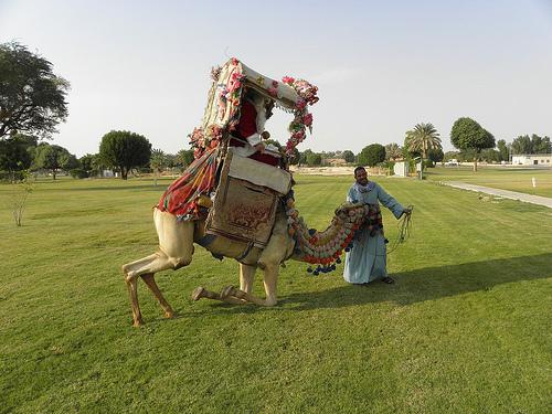 Santa Arrives on a Camel (3)