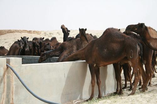 Jebel Abdala Trip (15)
