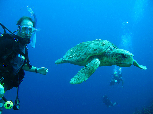 Ian Bland Diving with Turtles