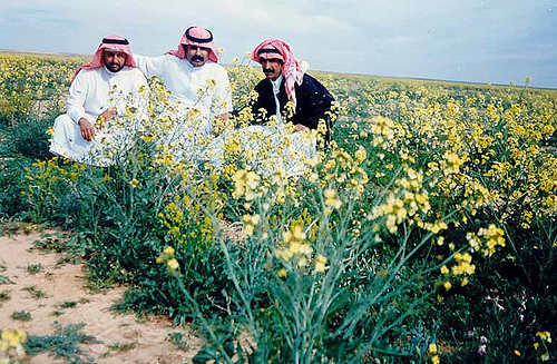 Desert Flowers After Heavy Rains – 1998