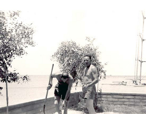 Gardening in Qaisumah – 1954