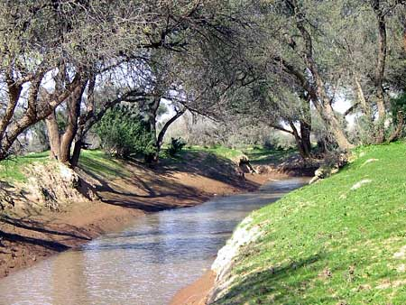 Creek in the Desert