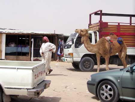 Camel Owner
