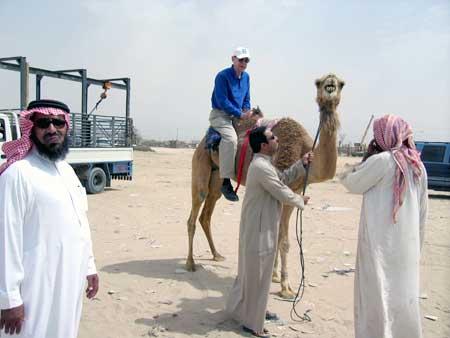 Camel Racing in Hofuf?