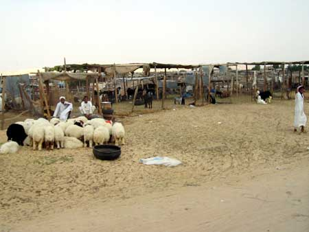 Thursday Sheep Market